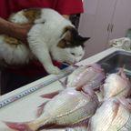 釣りの獲物でお料理