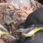 鳥など生き物