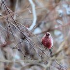 野山の野鳥 2018