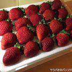 ドイカムのイチゴは高品質・高コスパで超おすすめ! in ラチャテーウィー