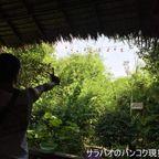 自然豊かなバーンナムプン水上市場でパチンコを撃つ in バーンガジャオ