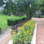 ベンジャシリ公園はプロンポン駅前にあるバンコク市民憩いの場