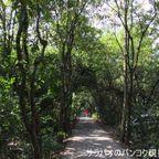 バンコク近郊と思えない自然が広がるバーンガジャオでサイクリング