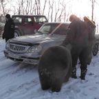 ロシアでは熊を放し飼いにしている人がいるようです。