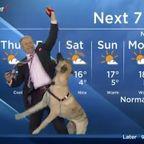 大きな犬と一緒に放送する天気予報で!犬が荒れ狂い食いちぎる!!