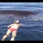 漁網に絡まったザトウクジラを救出!その後「ありがとう」と感謝の気持ちを伝える!!