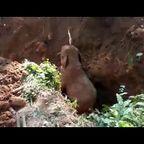 小象を救助すると!仲間のゾウが『ありがとう』と挨拶をする!!