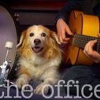 ギターに合わせて、太鼓を叩くワンちゃんが可愛い!!