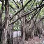 自然豊かで広大な鉄道公園を散策 in チャトゥチャック区