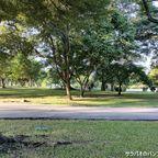 ラーマ九世公園は自然豊かなバンコク最大の公園 in プラウェート区