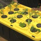 【DIY】収納ボックスで作る、自作の水耕栽培のシステム!!