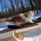 スノボーが大好きなクールな猫ちゃんが可愛い!!