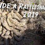 【閲覧注意】ガラガラ蛇がたくさん集まっている巣穴が凄まじくヤバイ!!