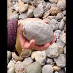 海岸で拾った丸い石の中身が衝撃的!!