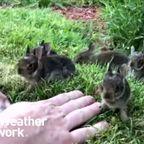 子ウサギたちとお話ができる男の人が癒される!!