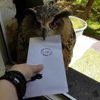手紙を持ってきてくれたフクロウにちょっと困る。。