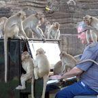 サルのたちにピアノを演奏すると、サルが凄く寄ってくる!!