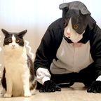 ネコのコスプレに反応するネコちゃんが可愛い!!