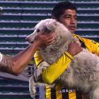 ボリビアのサッカーの試合に迷い込んだ犬がとても可愛い!!