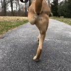 足が2本しか残っていない犬の生活の様子・・・