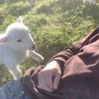 頭を撫でて欲しすぎる子ヤギがかわいい!!
