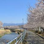 山梨【裏】桜ずかん