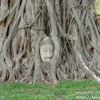 ワット・マハータートにある木の根元にある仏頭はアユタヤ観光の代名詞!