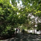 シーナコンクアンカン公園は自然豊かでサイクリングにおすすめ! in バーンガジャオ