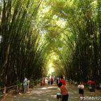 ワット・チュラーポン・ワナーラームは竹林のトンネルで有名な寺院 in ナコーンパトム県