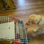 エサやりゲーム機で遊ぶ賢い犬が天才すぎる!!