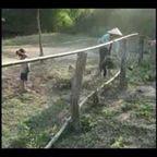子供と遊ぶテナガザルの身体能力の高さがヤバイ!!