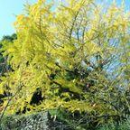 牛滝山 大威徳寺の紅葉
