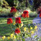 ニュアンスカラーの花たち
