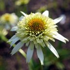 白い花の写真集