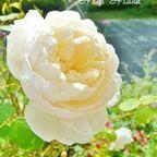 Flower album ✿