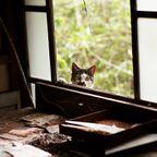関連記事「Ruin's Cat -奥屋凡一の猫-」のサムネイル画像