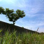 関連記事「【浸透実験池】未来の遺跡に想いを馳せて」のサムネイル画像