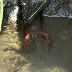 水辺のいきもの