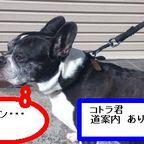ピース製菓ブログアルバム