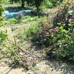 マンガ農園ブログ写真