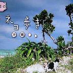 岩合光昭の世界ネコ歩き「沖縄」