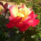 湯澤薔薇園