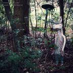 関連記事「ダルマの里:あとがき」のサムネイル画像