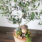 オリーブ+多肉植物寄せ植え