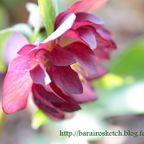 2015 季節の花
