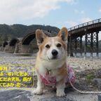 山口広島旅行