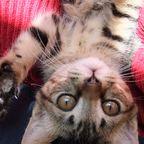 キジトラ猫*来実のクーちゃん Photo Album 1