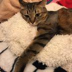 キジトラ猫*来実のクーちゃん Photo Album 2