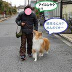 近所の散歩&訓練