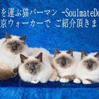 kitten -子猫-